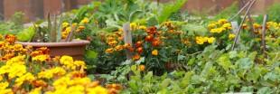 Jardins suspendus : des jardins dans la ville