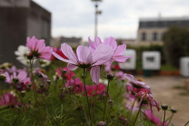 jardins-suspendus-fleurs