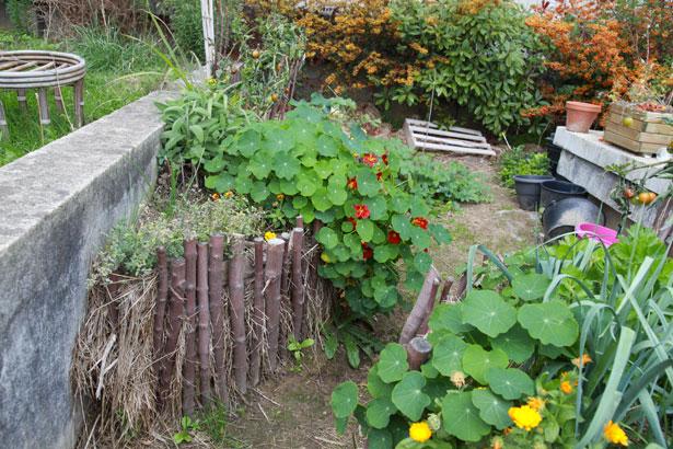 jardins-suspendus-potager-fleurs