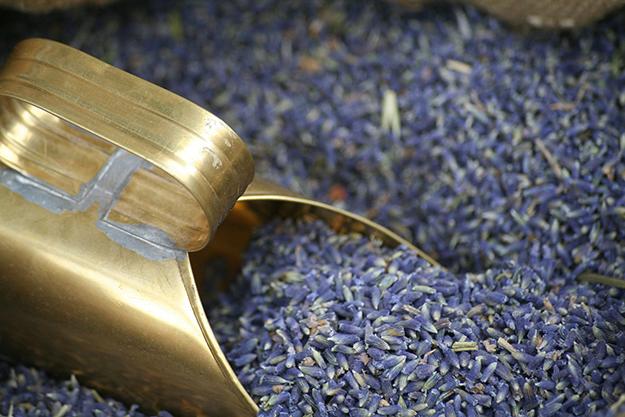 lavender-537851_1280-lavande-aspic-brulures-coups-de-soleil