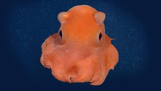 pieuvre adorable