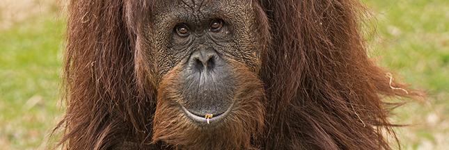 Aidez Francine Néago à secourir les orangs-outans