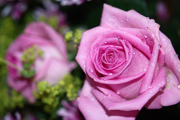 roses-8532_1280-conseils-belle-et-pleine-declat