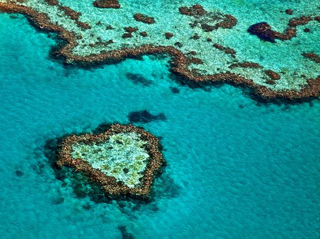 récif coeur corail nature