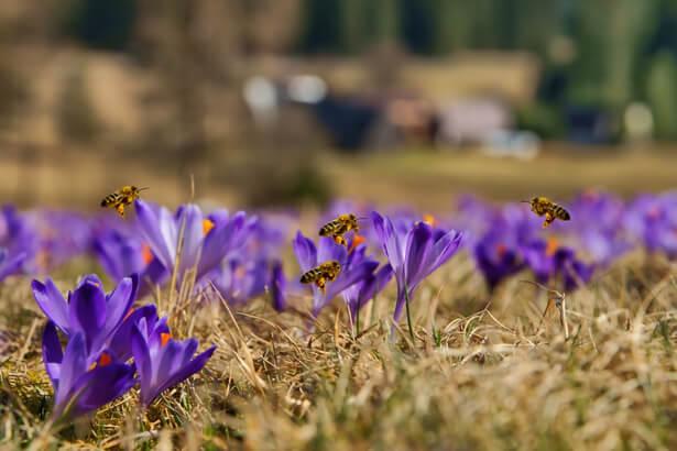 plantes qui aident les abeilles