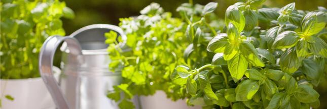 5 plantes qui adorent pousser en intérieur