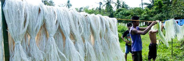 Découvrez le Piñatex, un cuir à base de fibre d'ananas