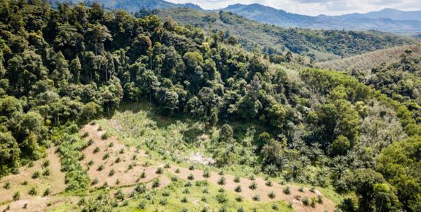 deforestation dans le monde