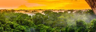 La déforestation dans le monde en 10 données clés