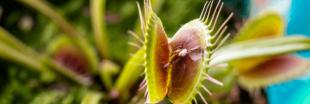 Intelligence des plantes : que disent-elles quand elles parlent entre elles ?