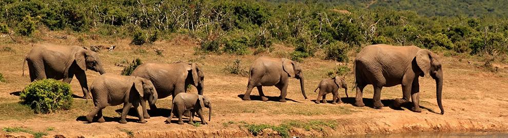 Protection des espèces : où en est-on ?