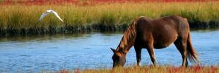 Équithérapie ou quand les chevaux soignent le mental