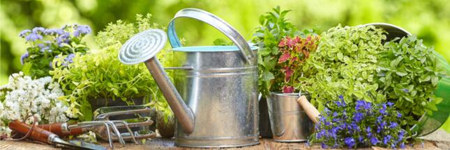 7 conseils pour un jardin bio naturel au printemps !