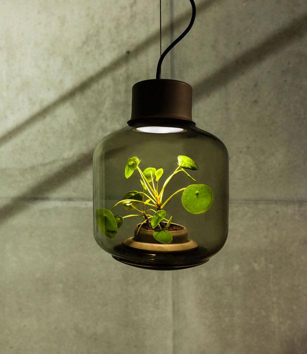 lampe-plantes-3