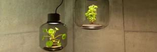Mygdal PlantLight : des lampes qui font pousser des plantes sans eau et sans lumière naturelle