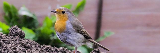 J'accueille et j'observe les oiseaux dans mon jardin