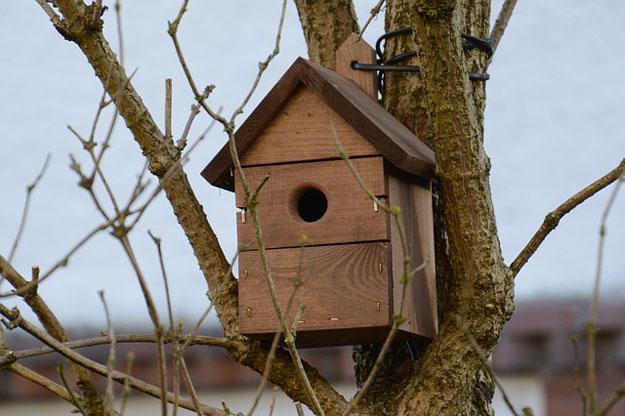 oiseaux-nichoirs-jardin