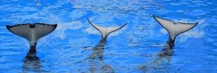 Marineland maltraite-t-il les animaux marins ?