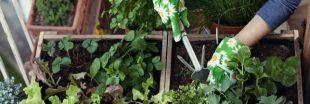 Comment réussir un potager de balcon