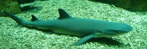 10 animaux qui tuent bien plus que les requins