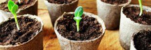 Quand et comment faire ses semis ?