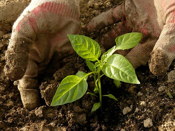 agroécologie jeune pousse