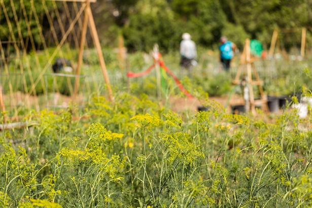 Les 48 heures de l 39 agriculture urbaine paris for Heure de jardinage