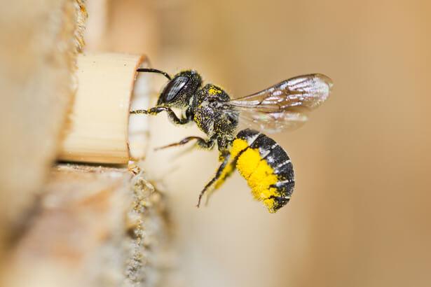 abeille nid