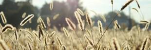 Allergie au pollen : diminuez les symptômes avec la réflexologie 3D
