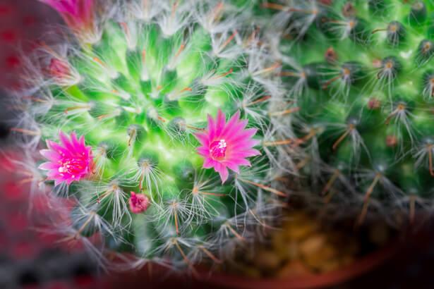 5 plantes pour purifier votre chambre le cactus page 2. Black Bedroom Furniture Sets. Home Design Ideas