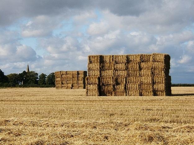 champ blé terres agricoles
