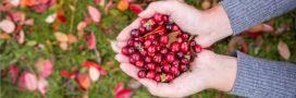La cranberry, meilleure prévention contre les infections urinaires