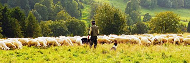 Luttes paysannes : la mobilisation continue