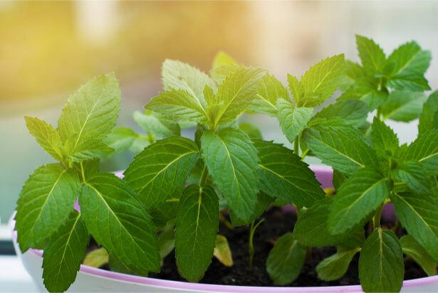 plantes dépolluantes, purifier