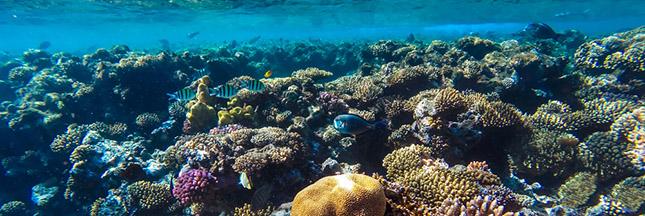 recif-corallien - Photo
