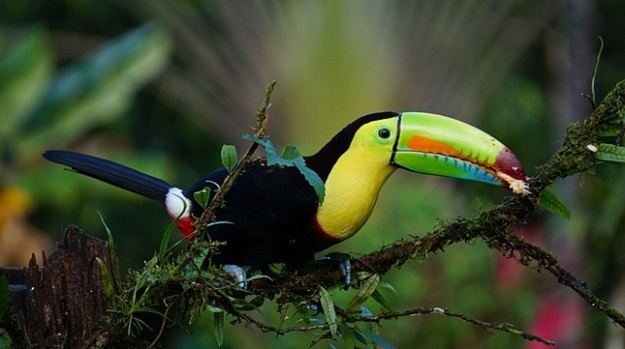 toucan costa rica, destinations écotourisme