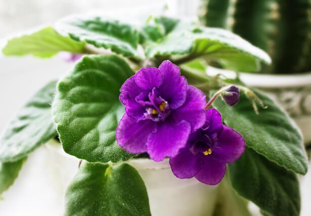 purifier , plantes dépolluantes