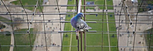 Biodiversité en Île-de-France : oiseaux et papillons en déclin
