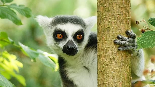 Madagascar tourisme durable faune lémuriens