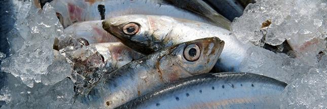 omega 3 sardines