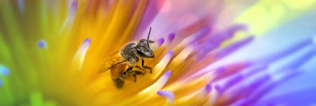 aider abeilles