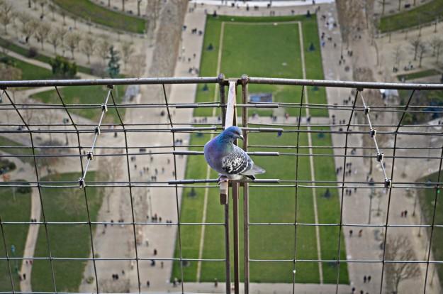 Les oiseaux ont diminué de 20% dans les villes d'Île-de-France