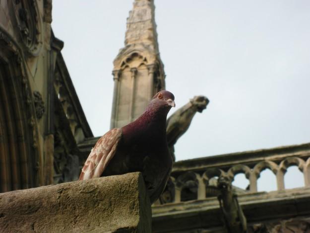 oiseaux-biodiversite-ile-de-france