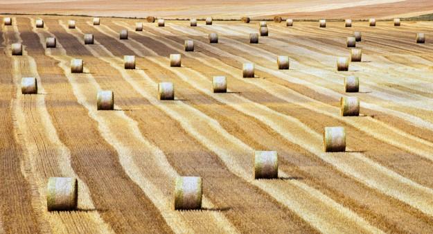 Le nombre d'espèces de plantes a chuté dans les milieux agricolés
