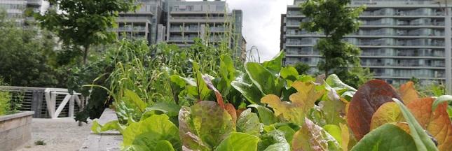 «Ville affamée»: comment nourrir la ville?