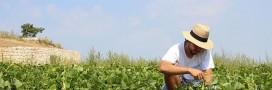 Découvrez Groww: l'application pour les jardiniers heureux