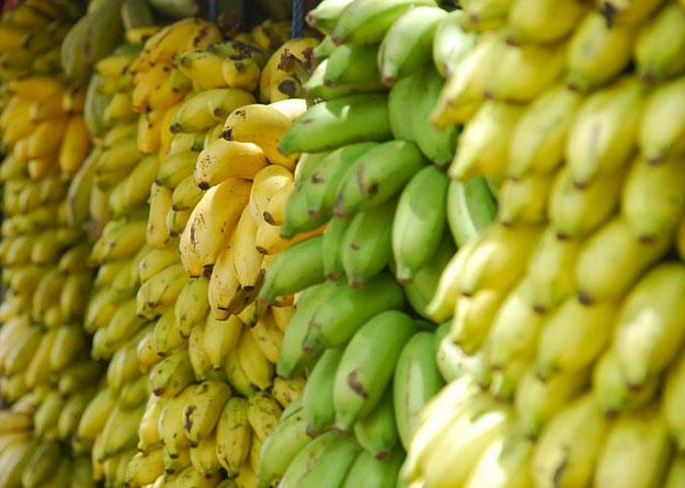 banane-exploitation-eco-responsable
