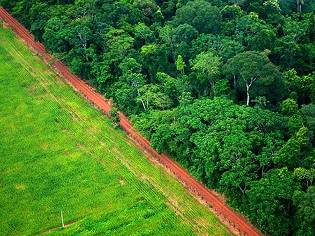 forêt amazonienne déforestation