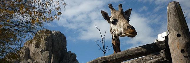 Fermeture du zoo de Buenos Aires qui deviendra un éco-parc