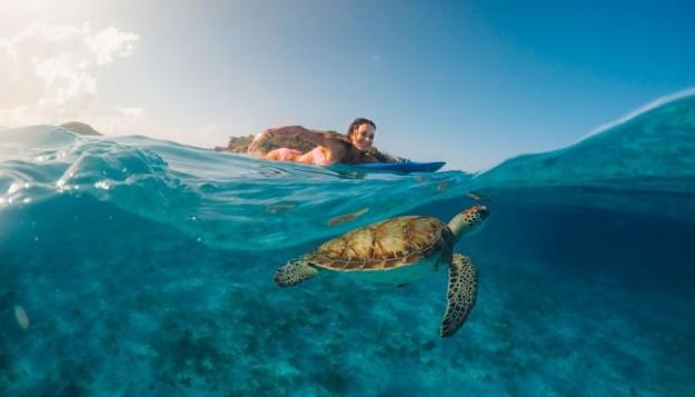 Expériences naturelles: nager entre tortues